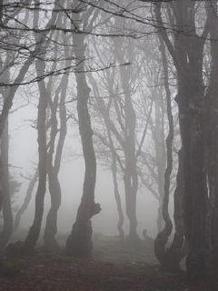 《灰色幽灵》最新免费章节素食先生之四